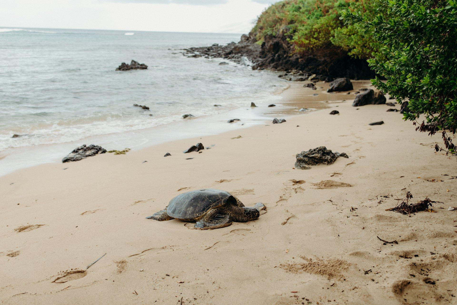 Maui-USA-travel-story-Flytographer-4
